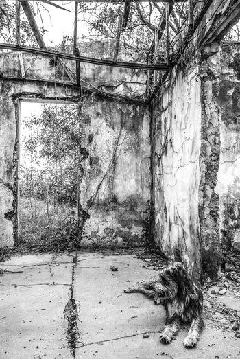 Abandoned House Abandono Animal Blackandwhite Blanco Y Negro Casa Abandonada Casa Abandonada Na Serra. Day Dog Nature No People Perro Tree The Secret Spaces