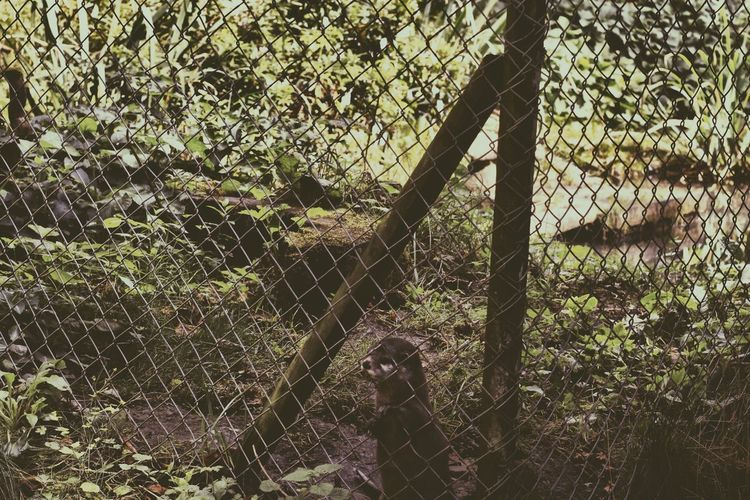 Beauty In Nature Boundary Chainlink Chainlink Fence Day Fence Growth Nature No People Non-urban Scene Outdoors Plant Protection Remote Safety Scenics Security Tranquil Scene Tranquility Tree Woods