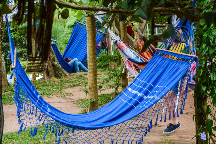 ezefer Blue Day Growth Hammock Hanging No People Outdoors Resting Tree
