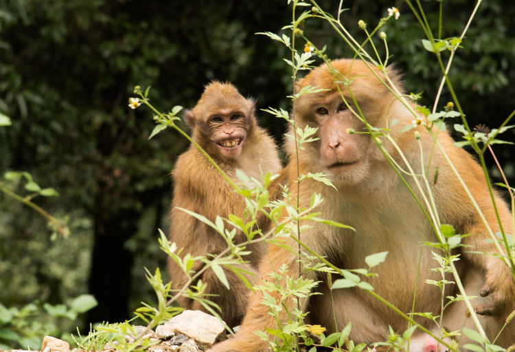Close-Up Of Monkeys Sitting By Plants