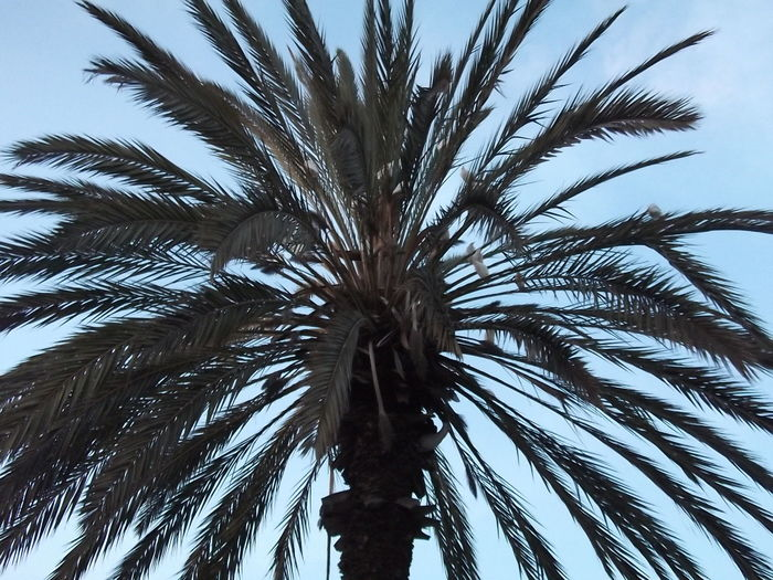 Palm tree Allah Calm Date Love Morocco Morocco_travel Nature Sky And Clouds