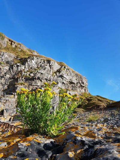 Wales Coast Path Yellow Flower Mountain Blue Rock - Object Sky Landscape Growing Mountain Range Blooming Geology Eroded Rock Formation