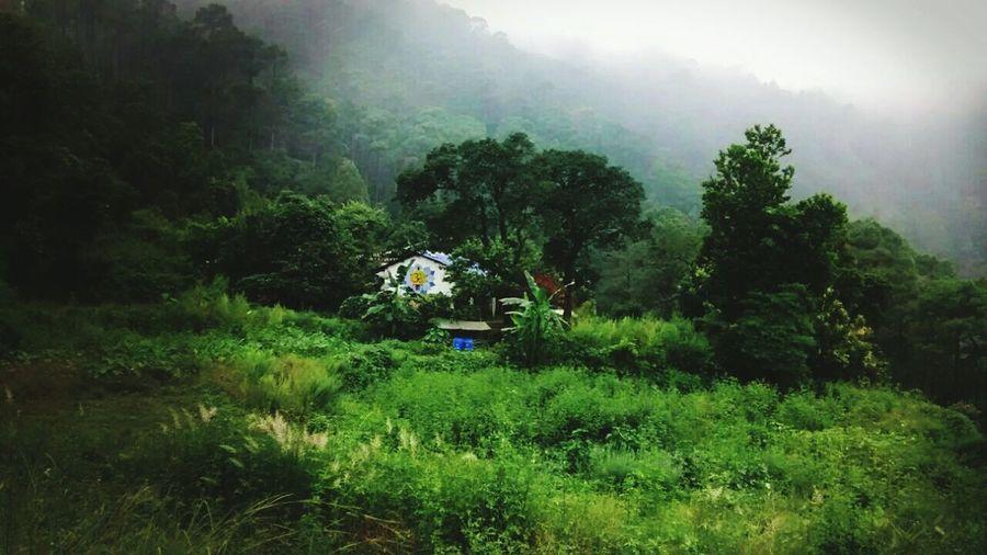 Dogaon Himalayan Farm Monsoon Farmlife