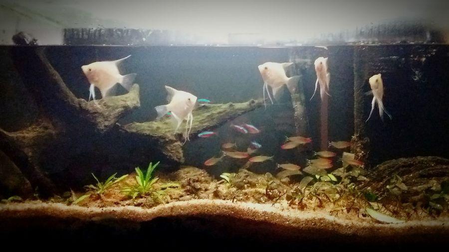 Aquário De água Doce Freshwater Aquarium Peixes Tropicais Tropical Fishes Animal Themes No People Domestic Animals Indoors  EyeEm New Here EyeEmNewHere EyeEm Selects