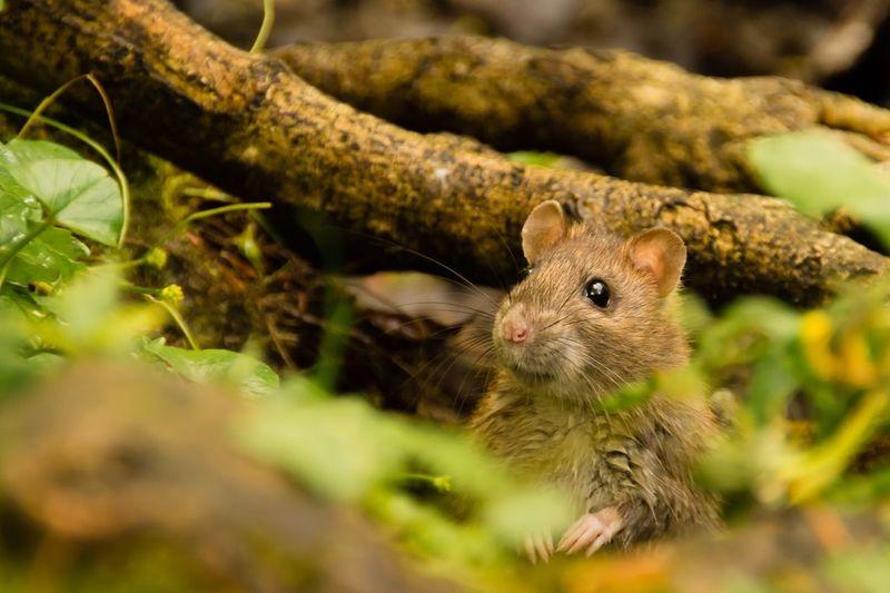 good morning world Rats Animals Animal Photography Animals In The Wild Photooftheday Nopeople Flensburg Germany Schleswig-Holstein EyeEm Best Shots Wildlife Wildlife & Nature