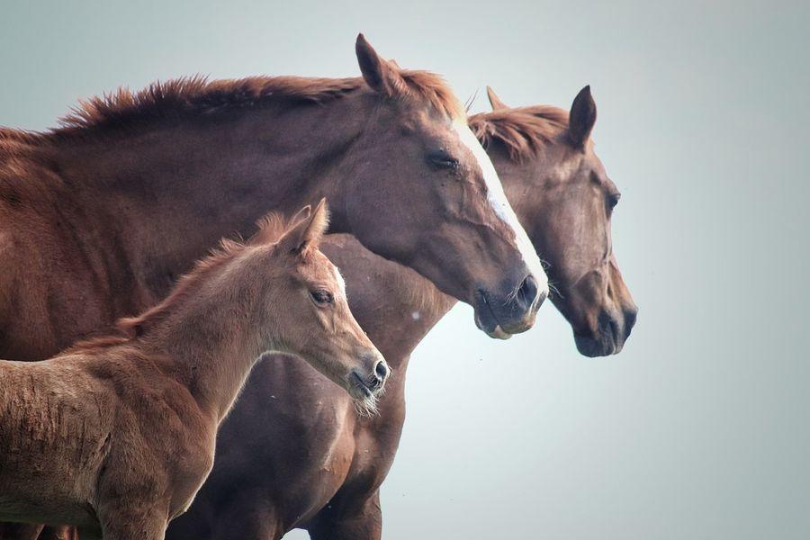 Caballos Horse Potro Animal Themes Mammal Domestic Animals No People Beauty In Nature EyeEmNewHere Livestock