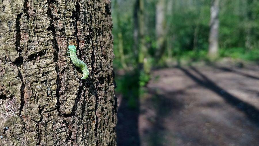 Little caterpillar Caterpillar Tree Tree Trunk Lush - Description Textured  Wood - Material Moss Close-up Grass Sky Green Color Plant Bark