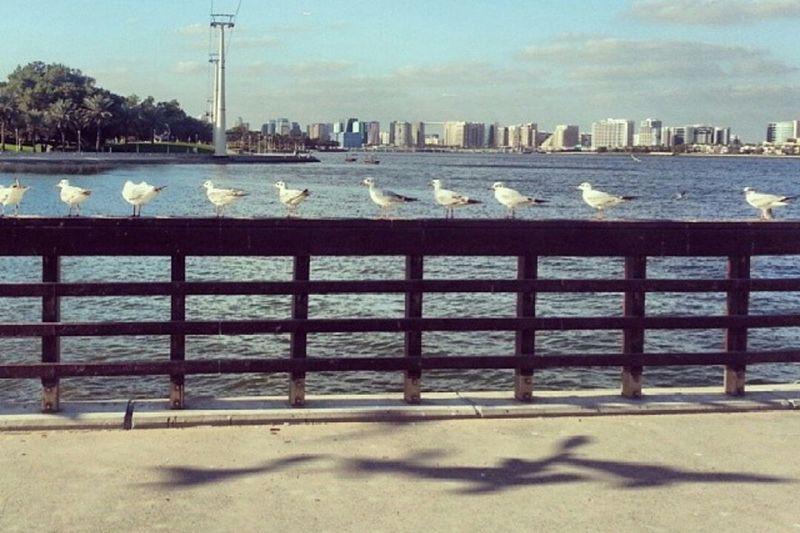 Life Is A Beach Skyline Landscape Birds