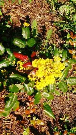 Outdoors Flowers Flowers, Nature And Beauty Flower Flowers,Plants & Garden Flower Photography Flowerporn
