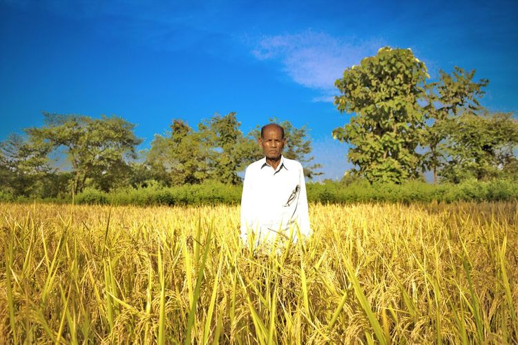 At the farmers field. Farmer Farmer's Life Farmers Field Farmland Farming Oldmanportrait Oldman Grandpa Paddy Field Ready To Harvest Indianphotographer Indianpeople Village Eyemphotography Eyem Best Shots Eyemphotos EyeEm Gallery Canonphotography Canon1200d