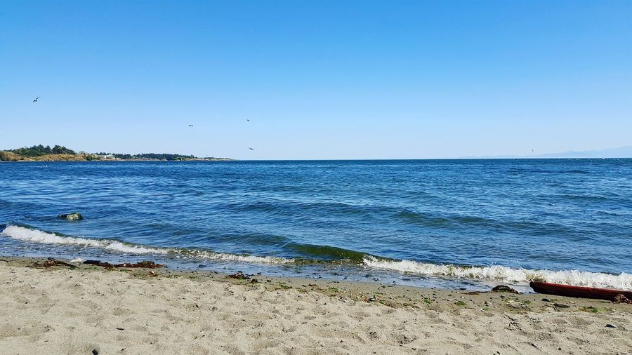 The Great Outdoors With Adobe Hanging Out Relaxing Enjoying Life Nature On Your Doorstep Neature Nature Photography Nature_perfection Feeling Blue Home Sweet Home Ocean Waves Ocean View Ocean Photography Beach Photography Sandy Beaches Esquimalt Lagoon