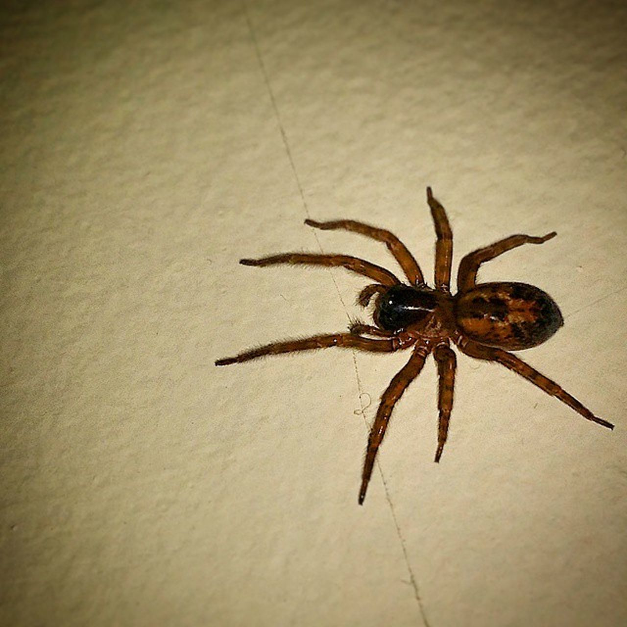 animal themes, insect, spider, one animal, animals in the wild, close-up, no people, indoors, day, nature