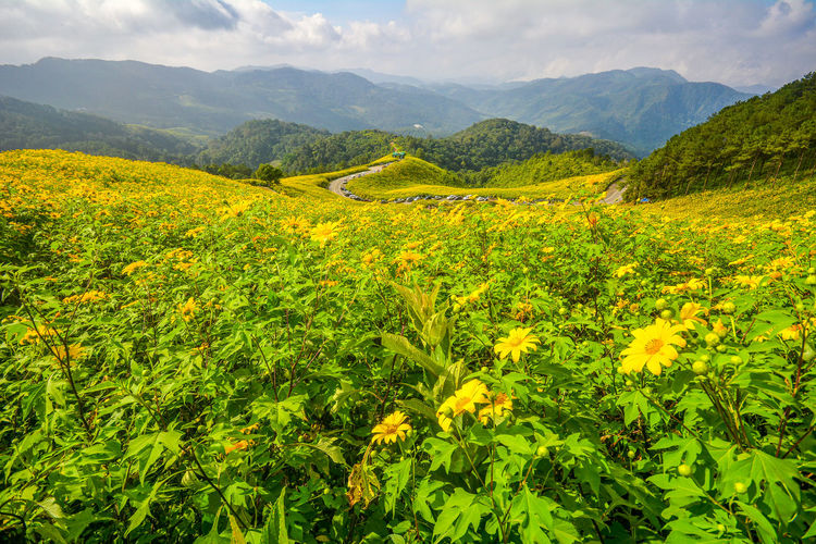 Yellow flowers growing on land