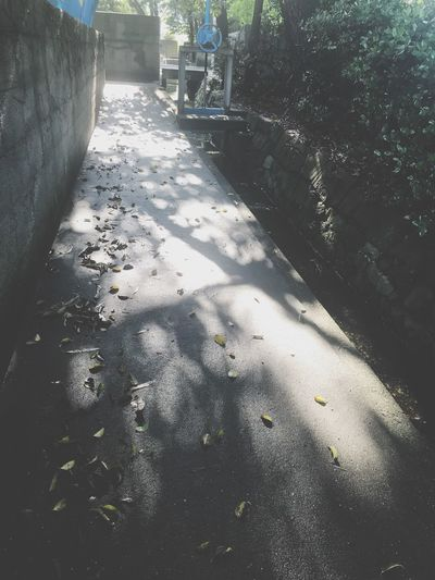 Sunlight Shadow Nature Day City Outdoors High Angle View Focus On Shadow Lifestyles Transportation Wet Built Structure Direction Tree Architecture Street Plant Two People Real People