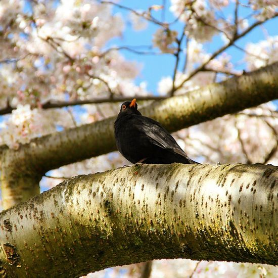 bird and spring.