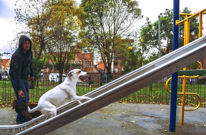 Dog standing on railing