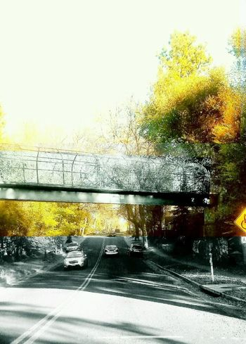 Bridge Bridge View Colorado Skemp Open Road Beautyeverywhere Yellow Color Beautiful Bridge Trees Collection No People Unlimited Potential Beautiful Scenery Autumn Collection Bridge Photography Bridges LimitlessLife Beautiful World Fall Collection Outdoors Colorado Springs Black & White Beautiful Picture Perfect. Colorsplash Colors Of Autumn