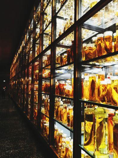 . Berlin Kadavar Fish Shelves Knowledge