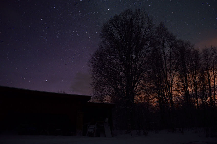 Astronomy Beauty Beauty In Nature Beauty In Nature Detail Galaxy Glow Landscape Light Pollution Majestic Nature Night Nightphotography No People Outdoors Season  Silouette & Sky Sky Space Star - Space Tranquility Tree Winter