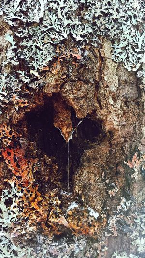 Treeheart Tree Art Beauty In Nature Treestump Artinnature Artofnature Winter