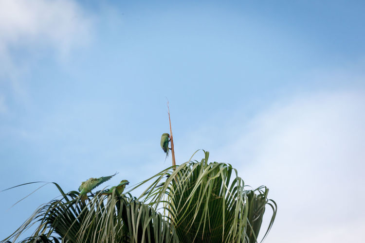 Low angle view of insect on plant against sky