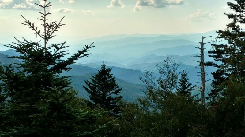 The beauty Smokey Mountains! This gorgeous view is from Water Rock Knob! Blue Ridge Parkway Smokey Mountains, NC Water Rock Knob, NC Pine Woodland Landscape Beauty Of Nature Fresh EyeEm Cell Phone Photography