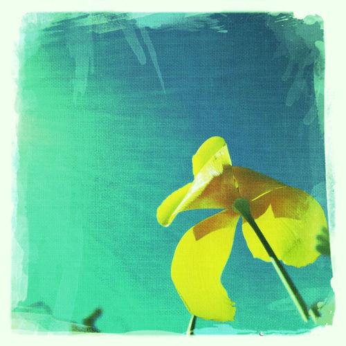 The Loneliest Flower. Enjoying Life Flowers Flowers, Nature And Beauty Flower Collection Flower Head Flowerlovers Flower Photography Flowerpower Pastel Power Pastel Colors Pastelflower