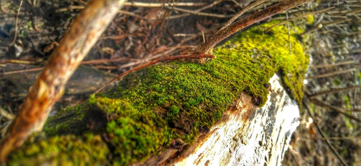 Showing Imperfection Nature Outdoors Photography Green Moss Covered Tree Spring Focus On Art Playing Hanging Out Taking Photos Enjoying Life Hiking Adventures Loveit Commentbelow Thanks For Following Me! ❤❤❤