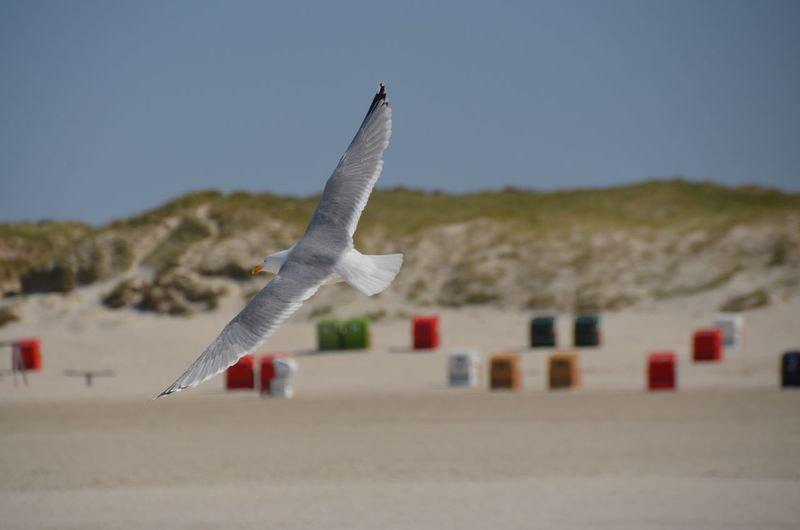 SEAGULL IN FLIGHT Beach Blue Sky