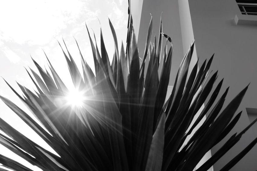 Sun Star sun star First Eyeem Photo