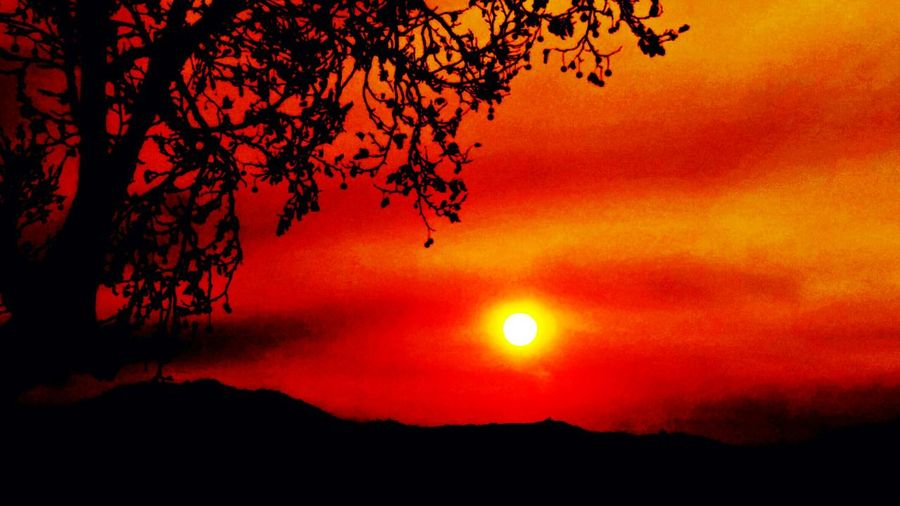 Sunset Orange Color Beauty In Nature Nature No People Landscape Tranquil Scene Tranquility Outdoors Sky Scenics Tree Close-up Beauty Mountain Red Sun Mendocino County Dramatic Sky