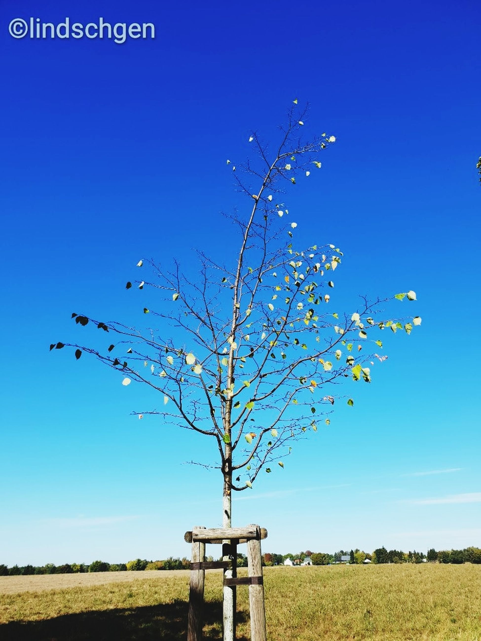 sky, blue, plant, clear sky, nature, tree, field, no people, land, landscape, day, agriculture, growth, environment, beauty in nature, scenics - nature, sunlight, tranquil scene, outdoors, branch