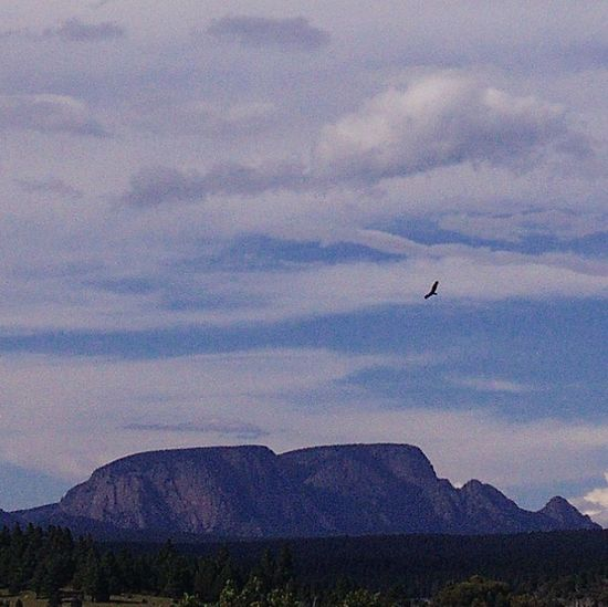 Flying Sky Cloud - Sky Bird Animal Themes Animals In The Wild Nature Outdoors One Animal Beauty In Nature Animal Wildlife Airplane No People Day Airshow Air Vehicle Aerospace Industry Newmexicophotography NewMexicoTRUE Beauty In Nature Animals In The Wild Newmexicoskies