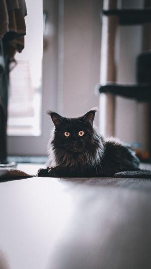 Portrait of black cat sitting on floor