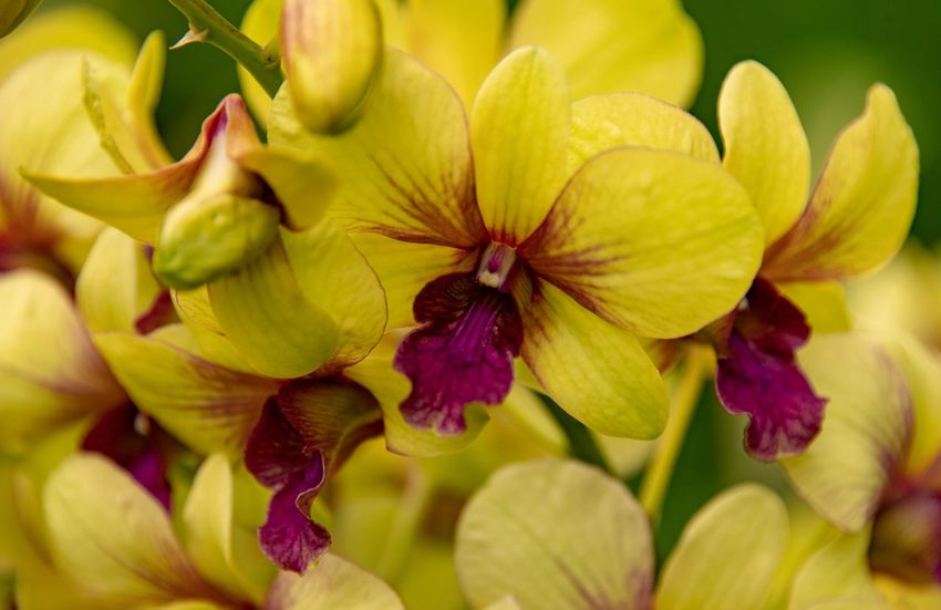 Orchidaceae Orchidee Flowering Plant Flower Fragility Beauty In Nature Freshness Vulnerability  Petal Plant Flower Head Inflorescence Close-up Yellow Growth No People Nature Pollen Day Full Frame Backgrounds Outdoors