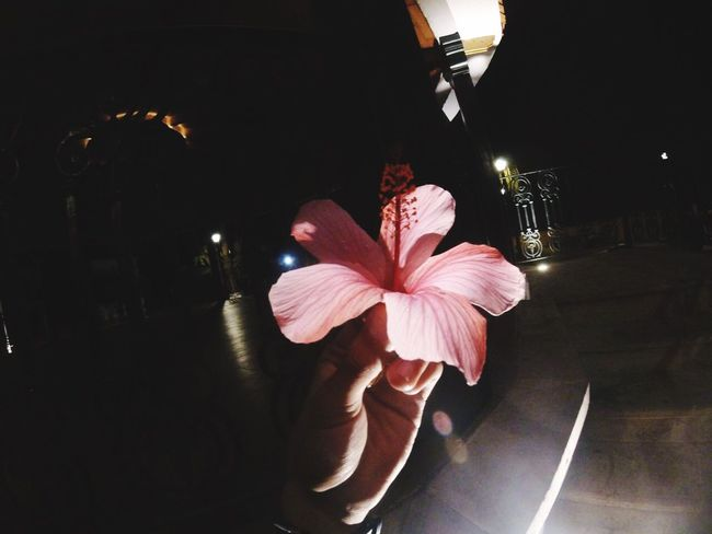 Indoors  Flower Table Illuminated Petal Night Real People Flower Head Beauty In Nature Freshness Food Nature Close-up