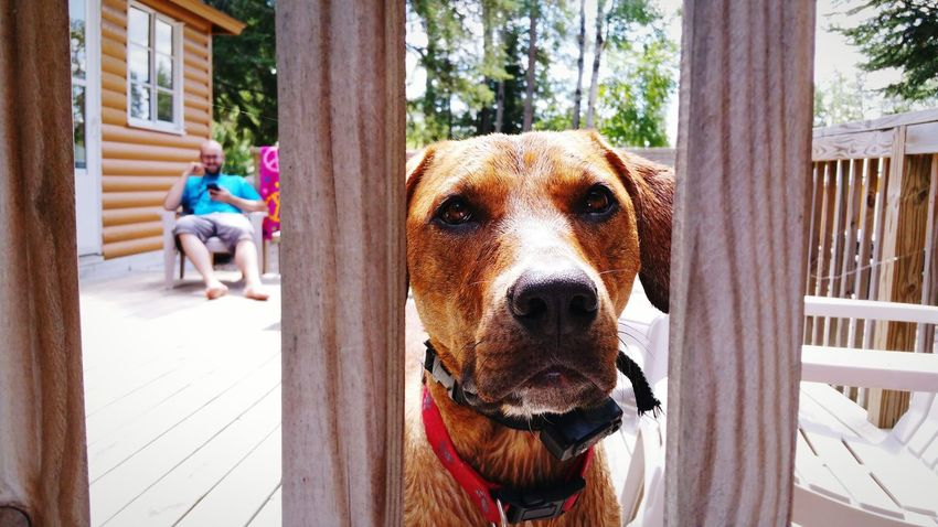 EyeEm Selects One Animal Dog Pets Day Domestic Animals Animal Themes Outdoors Mammal Lifestyles Tree Protruding People Adult Adults Only One Person Close-up Only Men