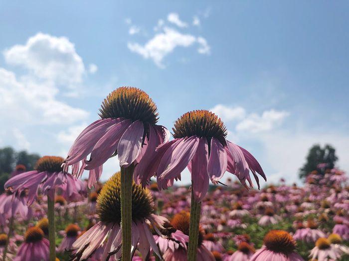 Close-Up Of Purple Flowering Plants Against Sky