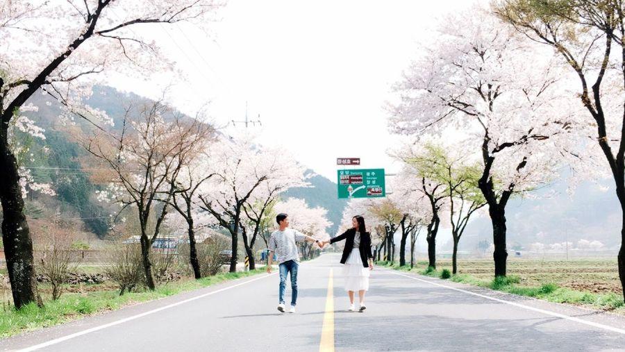 First Eyeem Photo Jeonnam_JangSung Cherry Blossom Tree Nobody Road Couple South Korea