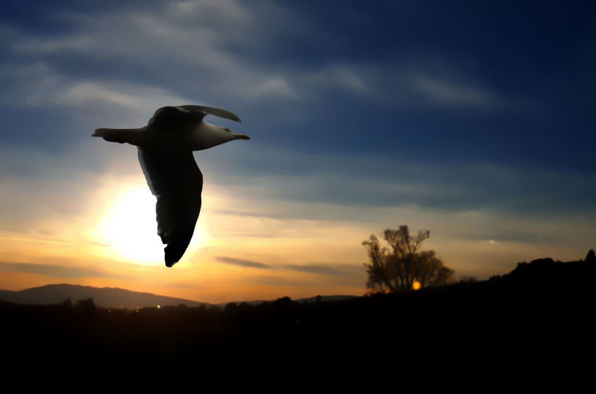 nella mia testa nei miei sogni , puoi volare Animal Themes Animal Wildlife Animals In The Wild Beauty In Nature Bird Cloud - Sky Day Flying Low Angle View Nature No People One Animal Outdoors Silhouette Sky Sunset Surrealism
