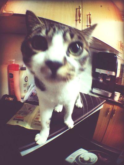 Wrang-E Cat