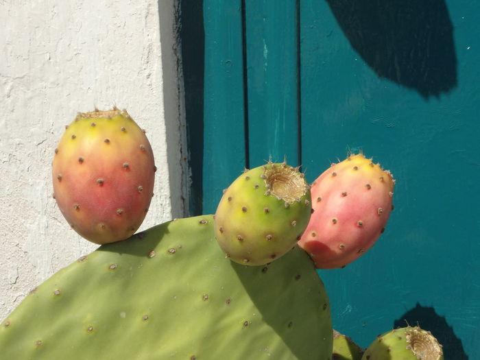Succulent Plant Barrel Cactus Saguaro Cactus Plant Life The Great Outdoors - 2018 EyeEm Awards