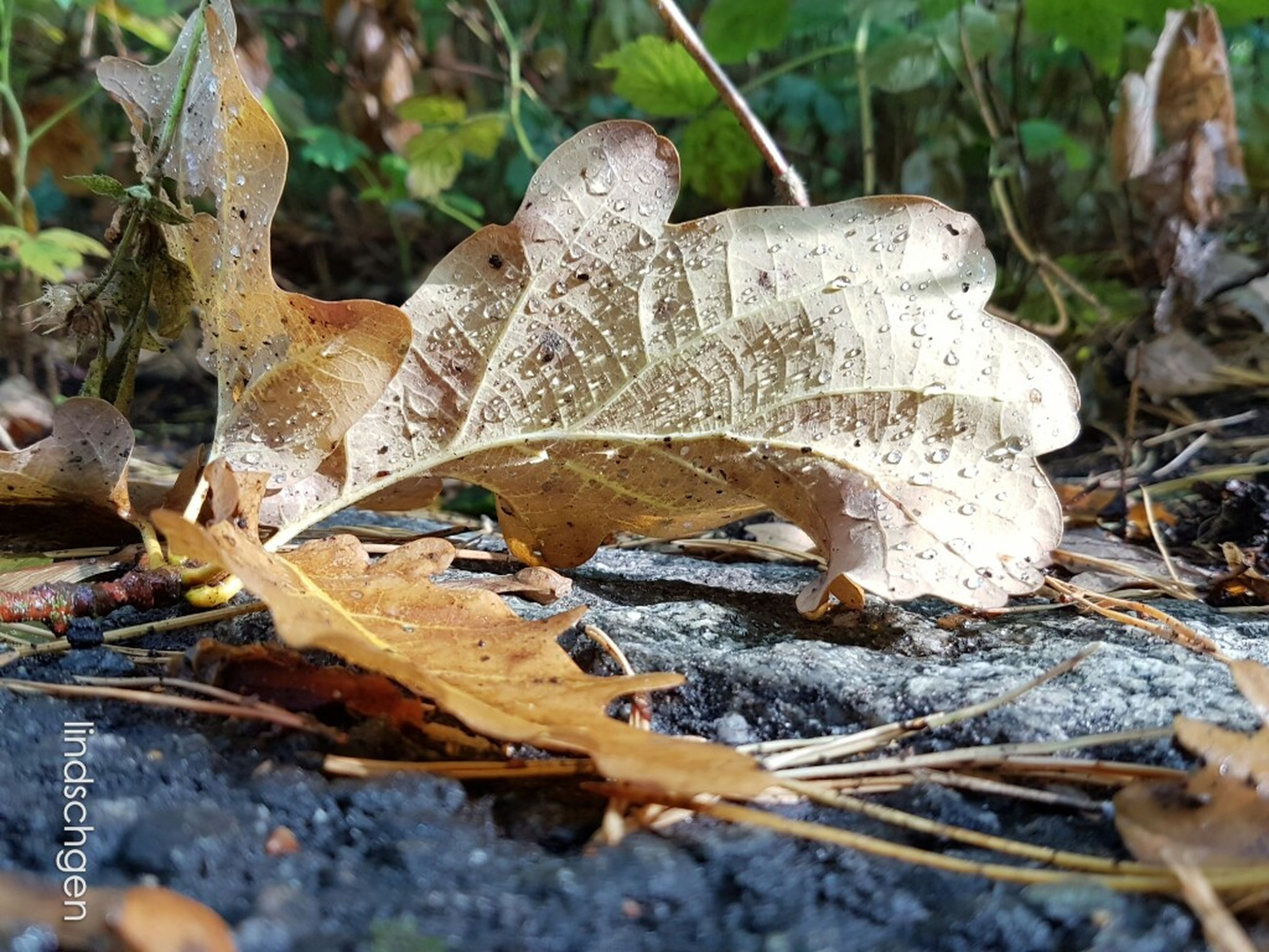 leaf, dry, autumn, change, close-up, season, selective focus, leaves, nature, maple leaf, day, fallen leaf, outdoors, fragility, tranquility, non-urban scene, vibrant color, beauty in nature