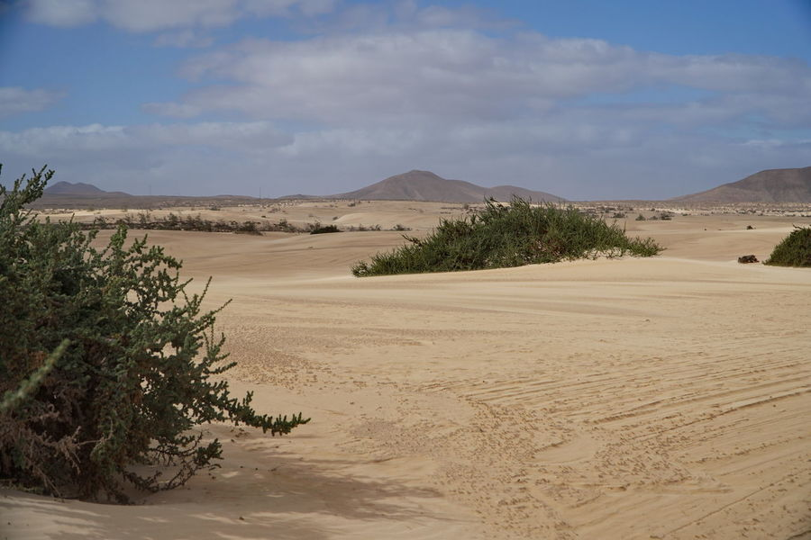 c2 Arid Climate Beauty In Nature Cloud - Sky Corralejo, Fuerteventura Day Desert Landscape Nature No People Non-urban Scene Outdoors Physical Geography Plant Sand Sand Dune Scenics Sky Tire Track Tranquil Scene Tranquility Tree
