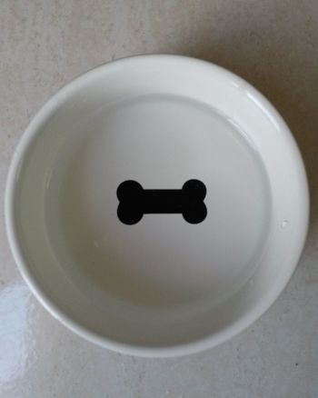 Empty dog feeder Black And White Bowl Close-up Dog Bowl Dog Feeder Empty Indoors  No Food No People Starve