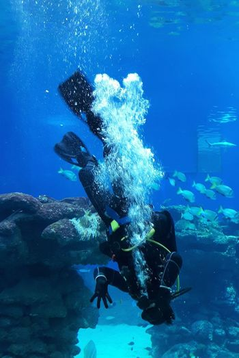 Young man scuba diving in sea