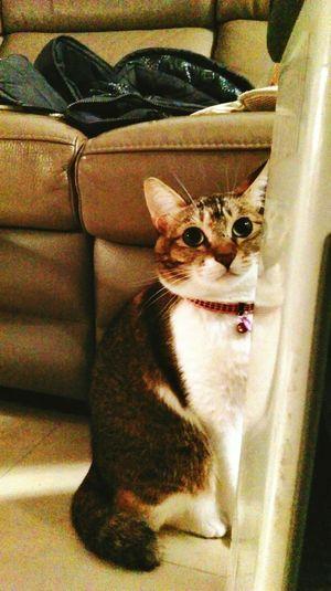 Taking Photos Cute Pets Cat Lovers Cat