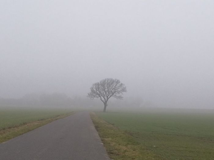 A lone tree in the misty fields. Tree Nature Fog Grass Landscape Beauty In Nature Outdoors No People Field Single Tree Agriculture Day Sky Mist Misty Paved Road Road Roadside