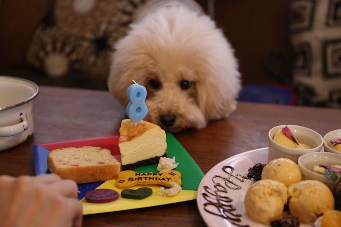 Japan I Love My Dog DogLove Enjoying Life My Toypoodle Japon Birthday Party HappyBirthday Cutedogs Cute Pets