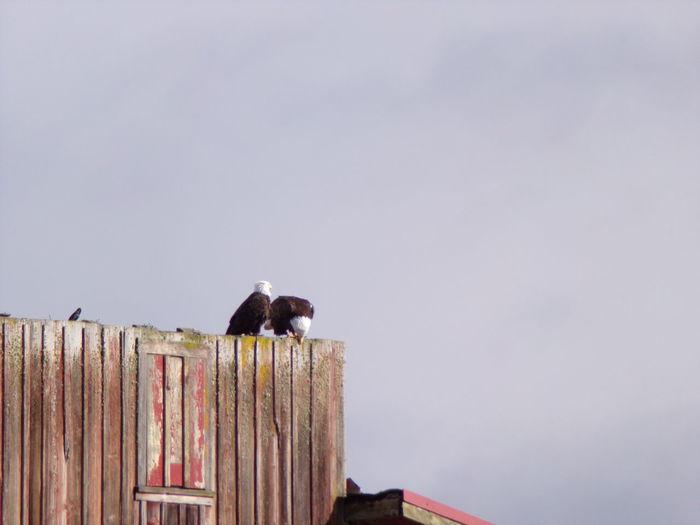 Watching Birds